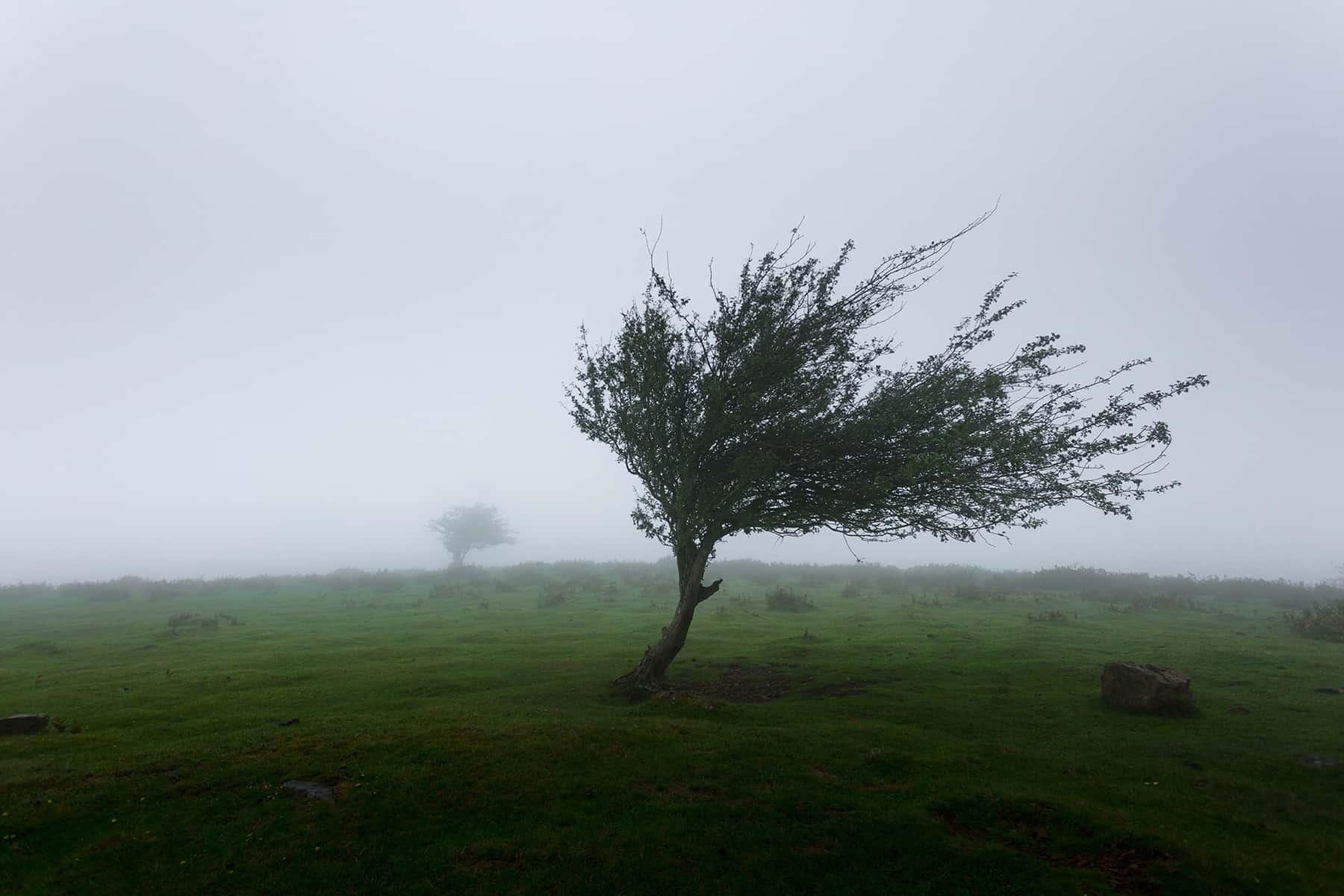 roof damage insurance claim wind